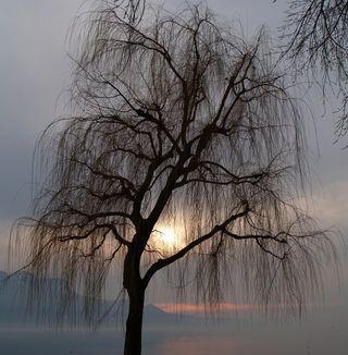 Feb2011 - tree